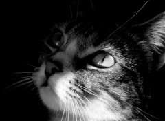 Fonds d'écran Animaux Jeune chat