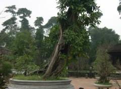Fonds d'écran Voyages : Asie Thien Mu
