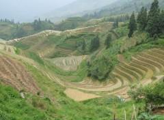Fonds d'écran Voyages : Asie riziere en terrasse