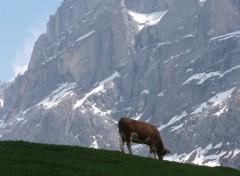 Fonds d'écran Voyages : Europe vallée de Grindelwald