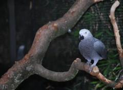 Fonds d'écran Animaux oiseau