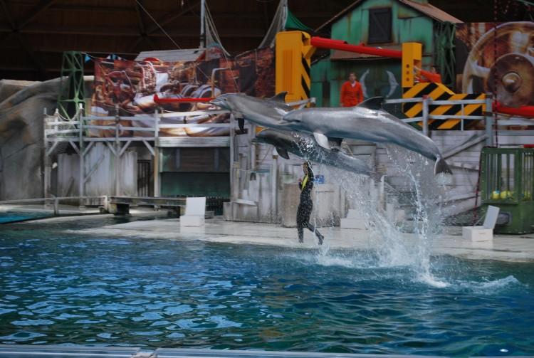 Fonds d'écran Animaux Vie marine - Dauphins Dauphins au Boudewijn seapark en Belgique