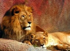 Fonds d'écran Animaux Africa beauty