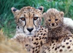 Fonds d'écran Animaux Une maman et ses petits