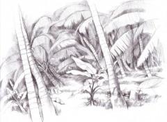 Fonds d'écran Art - Crayon jungle