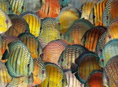Wallpapers Animals Discus sauvages