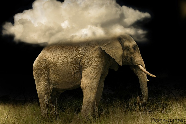 Fonds d'écran Art - Numérique Animaux Dream of Elephant