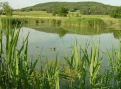 Wallpapers Nature Reflets sur un étang