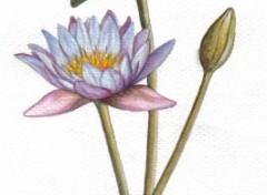 Fonds d'écran Art - Peinture Lotus