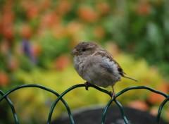 Fonds d'écran Animaux Petit oiseau