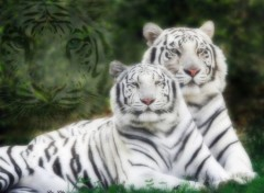 Wallpapers Animals Tigres blancs