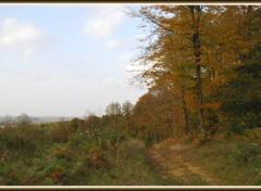 Wallpapers Nature Automne en forêt picarde