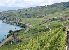 Wallpapers Trips : Europ Vignoble au dessus du lac léman