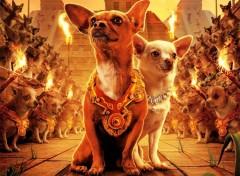 Fonds d'écran Cinéma Le-Chihuahua-de-Beverly-Hil