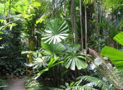 Wallpapers Trips : Oceania Jardin botanique, Cairns, Queensland, Australie
