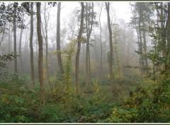 Wallpapers Nature Brumes en Picardie