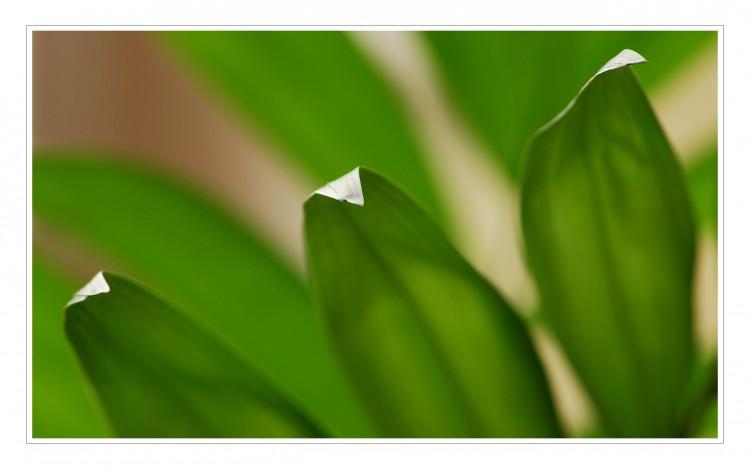Fonds d'écran Nature Feuilles - Feuillages La verdure d'automne