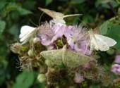 Wallpapers Animals déjeuner chez les papillons