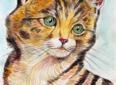 Fonds d'écran Art - Crayon Chaton
