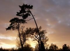 Fonds d'écran Voyages : Europe coucher de soleil au bois de vincennes