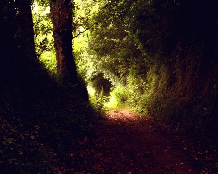 Fonds d'écran Nature Arbres - Forêts Into the wild
