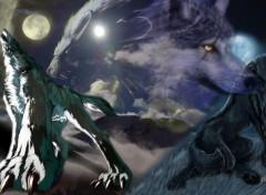 Fonds d'écran Animaux le chant du loup