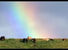 Fonds d'écran Nature Snorrastaðir