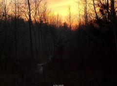 Fonds d'écran Nature Un sentier en hiver