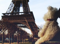 Fonds d'écran Voyages : Europe Doggy around Paris