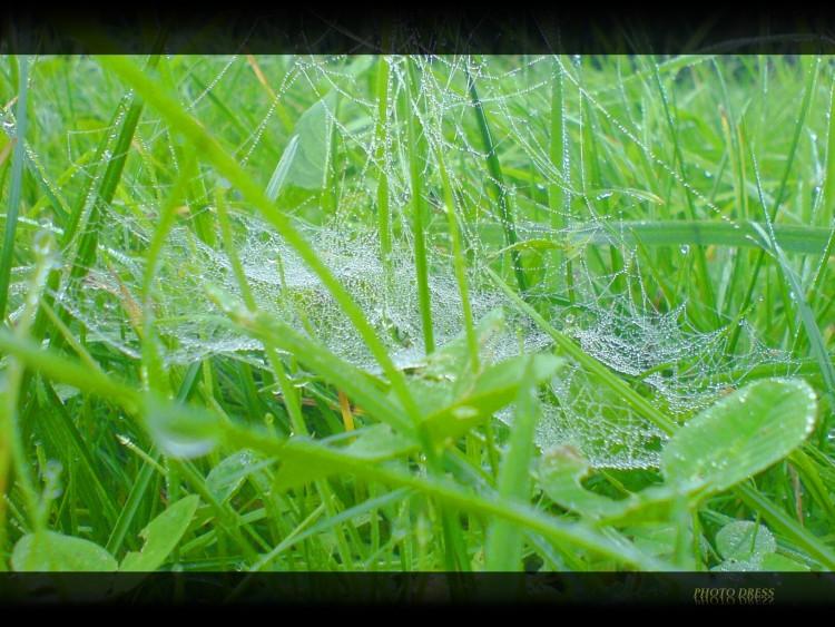 Fonds d'écran Nature Herbes Herbe verte