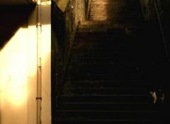 Fonds d'écran Constructions et architecture Les entrailles de Caen : Ombre VS Lumière