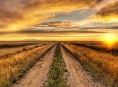 Fonds d'écran Nature La Route de Demain