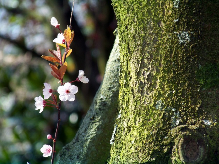 Fonds d'écran Nature Fleurs Wallpaper N°225735
