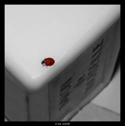 Fonds d'écran Animaux Insectes - Coccinelles Escalade