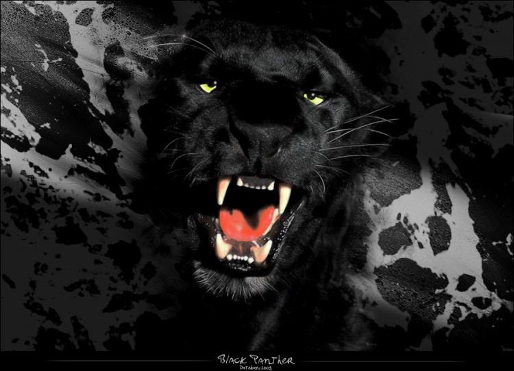 Wallpapers Digital Art Wallpapers Animals Black Panther By
