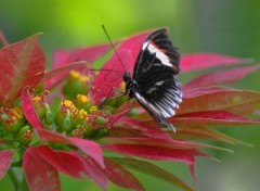 Wallpapers Animals Papillon