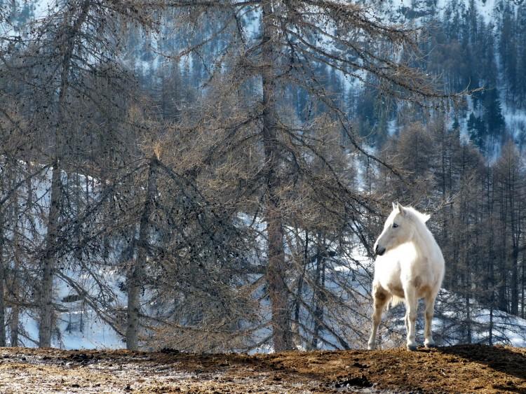 Wallpapers Animals Horses Un cheval blanc dans la forêt !!!