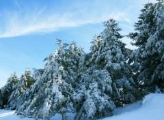 Wallpapers Nature L'hiver décore ses sapins