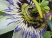 Fonds d'écran Nature Fleur et bourdon