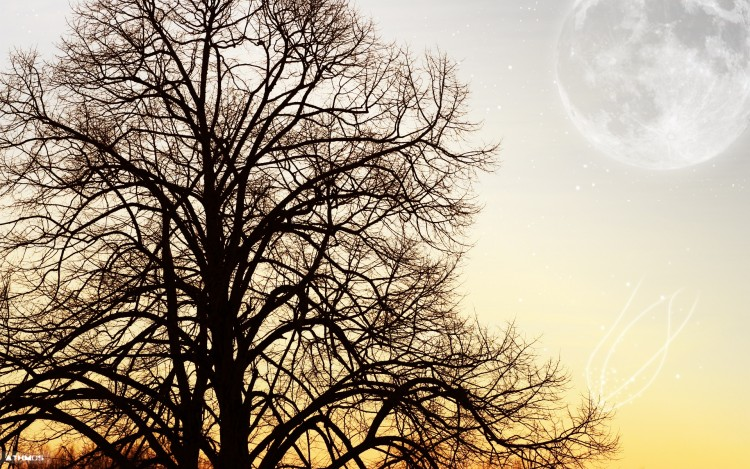 Wallpapers Nature Trees - Forests L'arbre et la lune