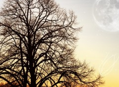 Wallpapers Nature L'arbre et la lune