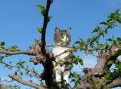 Fonds d'écran Animaux Chipie en observation dans le mûrier-platane