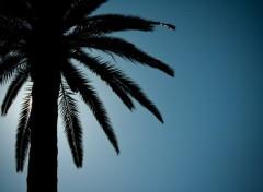 Fonds d'écran Nature Palmier au Soleil