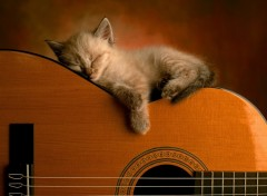 Wallpapers Animals Repos en musique...