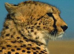 Wallpapers Animals Profil sauvage