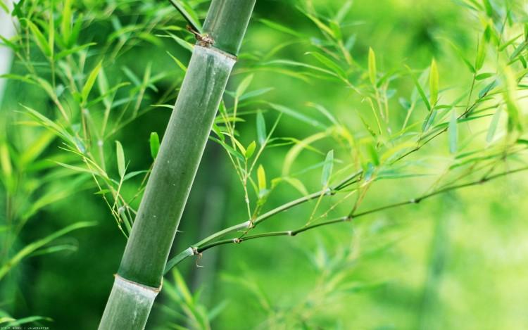 Fonds D Ecran Nature Fonds D Ecran Plantes Arbustes Canne De Bambou Par Lik Hebus Com
