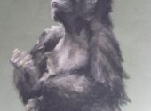 Fonds d'écran Art - Crayon gorille