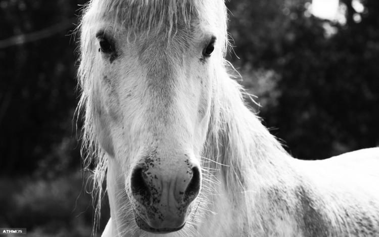 Wallpapers Animals Horses Cheval d'ombre et de lumière