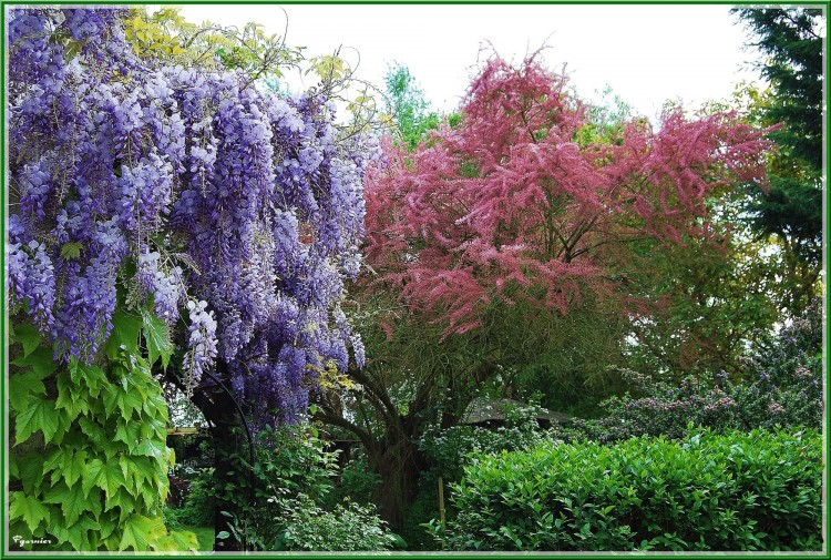 Fonds d 39 cran nature fonds d 39 cran parcs jardins jardin de printemps par pablo37 - Fond d ecran jardin anglais ...