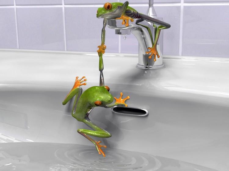 Fonds d'écran Humour Animaux Frogs